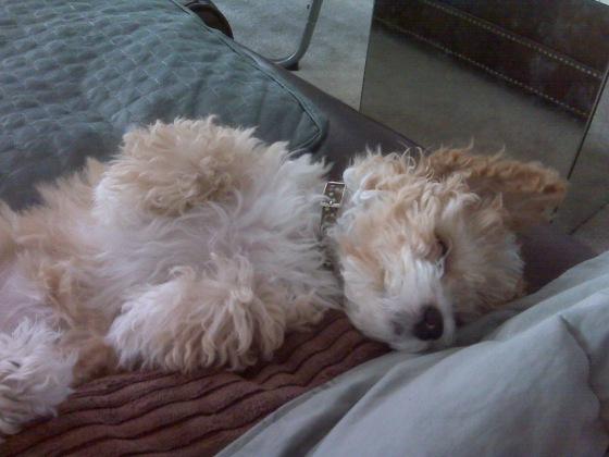clarabelle-sleeping