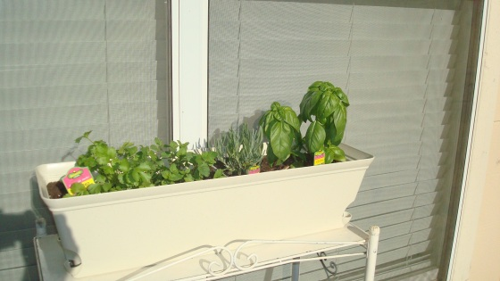 My little herb garden!