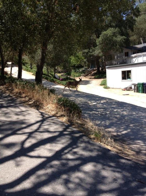 Valle driveway deer
