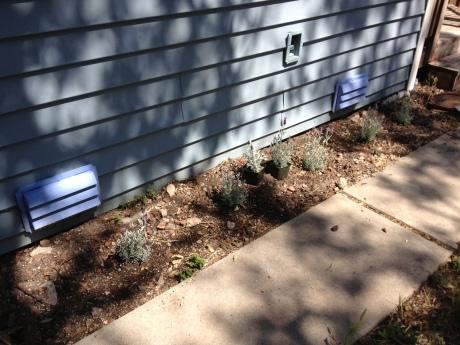 Valle side yard lavender